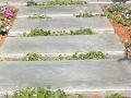 אבני מדרך ריצוף בטון מוחלק