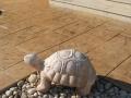 צפחה גדולה בשיטת הטבעות בטון