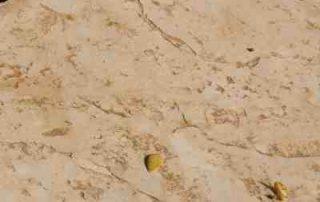 ריצוף דמוי סלע פראי
