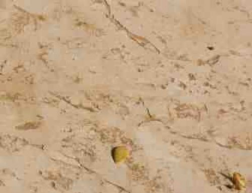בומנייט סלע פראי